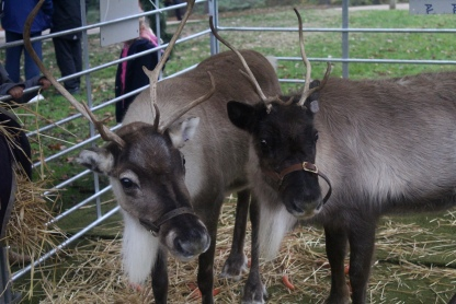 Blitzen & Cupid Is That You?